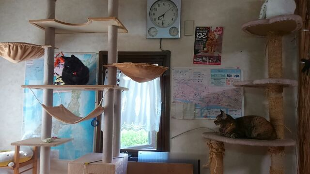 新、猫タワー