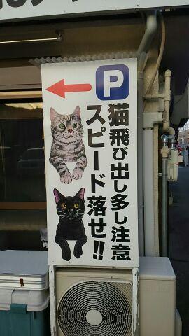 猫飛び出し注意