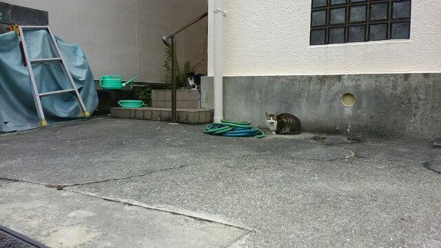 猫横丁の猫たち