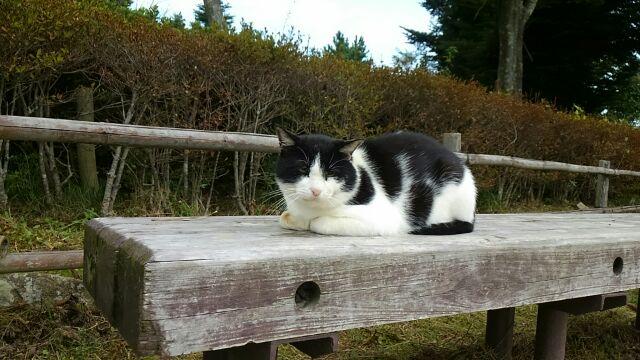 写真は昨日摩耶山にいた猫