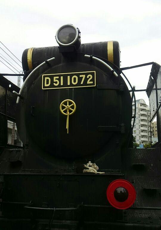 D51と猫