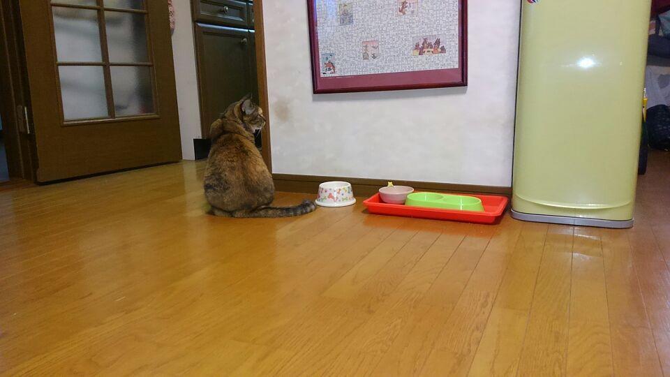 食べ物なーい?