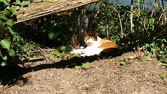 公園に居た猫