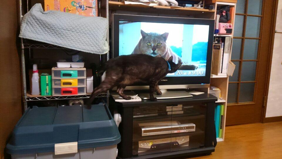 世界猫あるき