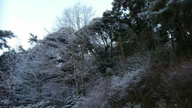 お山は雪化粧