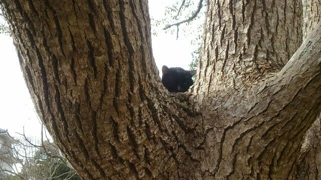 樹の上に猫