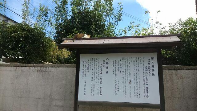 看板の上の猫