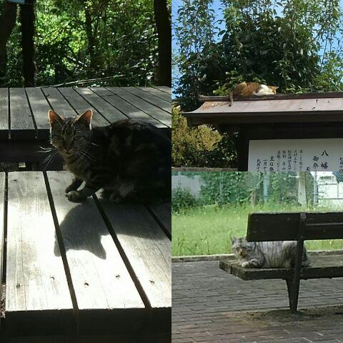 昨日会った猫たち