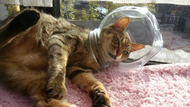 初夢は宇宙飛行士?