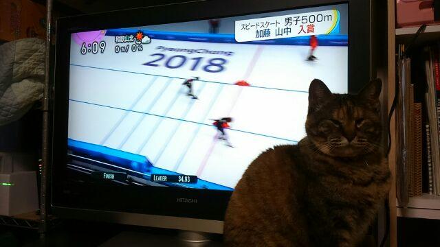 オリンピックやってます