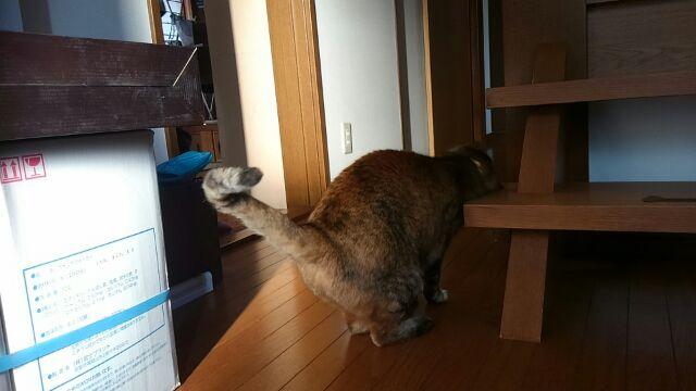 シン坊は階段も好き