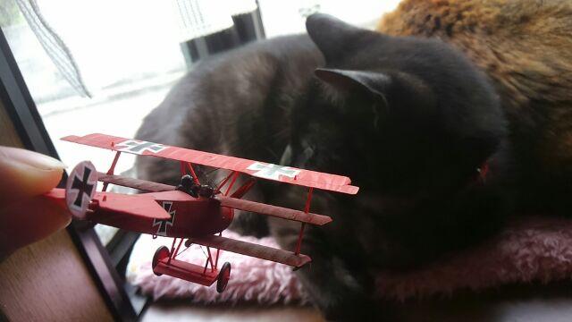 レッドバロン、猫に挑む