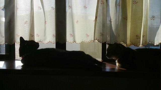 枕元の猫ども