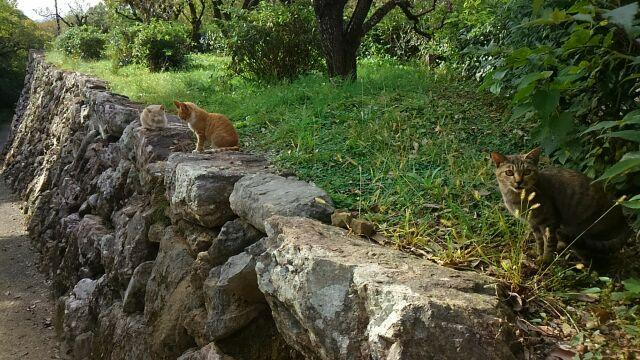 高知城の猫
